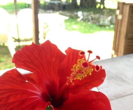 【沖縄離島めぐり】八重山旅行プランはお任せください☆ イメージ1