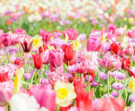 カウンセリングなしでお花からのメッセージを伝えます 今のあなたに必要なお花のメッセージ 癒しや気づきを得るヒント イメージ1