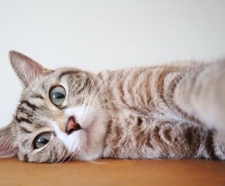 大切なペットに☆レイキヒーリングで癒します ペットへの想いも思念伝達します。 イメージ1