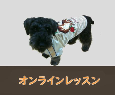 オンラインレッスン!愛犬も飼い主さん楽しく学べます 60分 2333円x3回(2回目以降の方へのサービスです) イメージ1