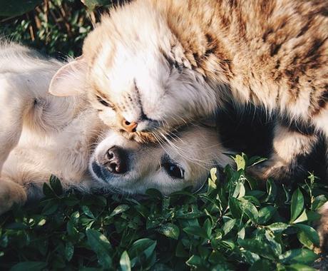 ペットのお世話の仕方などをお教えいたします 今まで8種類のペットを家族で飼ってきました イメージ1