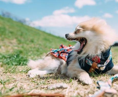 あなたのペットの問題行動解決します ペットがしている行動の意味、気持ち、解決策お教えします! イメージ1