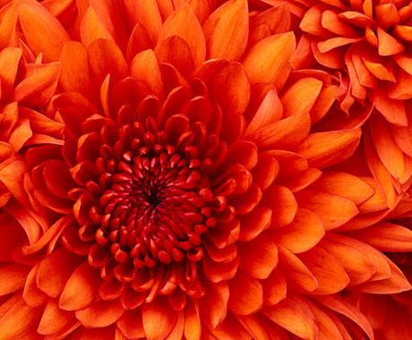 アバンダンティア・アバンダンス・レイの伝授します ♡成功・繁栄・豊かさ・幸運の美しい女神からの贈り♡ イメージ1