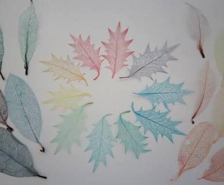 透け感が美しい葉脈標本を作成します ハーバリウムなどインテリアの作成などにどうぞ♪ イメージ1