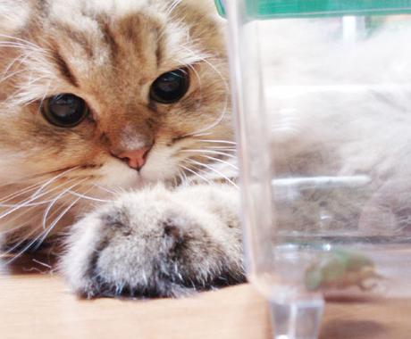 ペットの気持ちを占います そっけなく見えても意外と飼い主さんを観察しているようです イメージ1