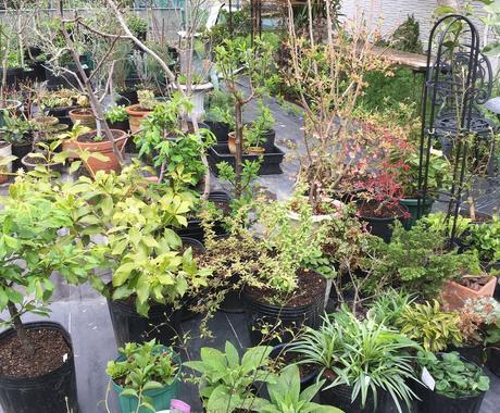 植物の管理方法アドバイスします 今お育ての植物についてお悩み事はございませんか? イメージ1