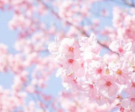 受験、資格に合格するか霊視タロットで視ます アドバイスも伝授致します。皆様に桜が咲きますように。 イメージ1