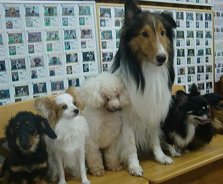 「愛犬との暮らし」本当にそれで大丈夫??実績関東No1のWANPOがアドバイス(#^.^#) イメージ1