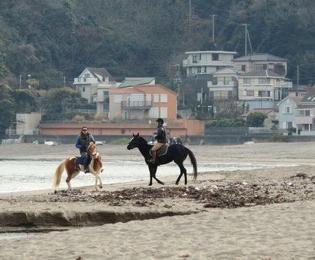 馬に乗りたい・馬と遊びたい方へ、あなたに合った乗り方や場所をアドバイスします(外乗情報も多数有) イメージ1