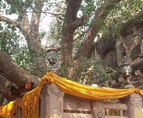 お釈迦様ゆかりの寺院のエネルギーをお届けします インドブッダガヤの、マハボディ寺院の菩提樹直送のエネルギー! イメージ1